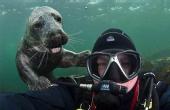与灰海豹潜水