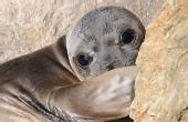 与可爱的象海豹面对面