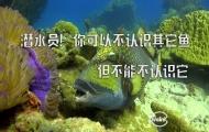 海底小霸王泰坦扳机鱼