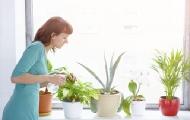 植物也过上智能生活!
