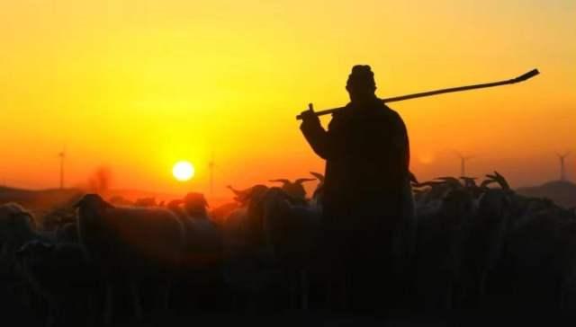 2017年3月23日,山西神池。放牧的老人在夕阳下。阴天