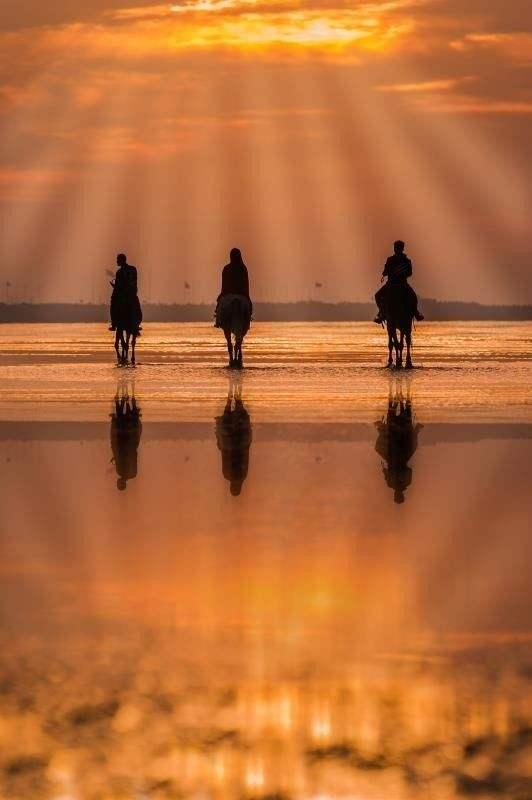 2017年9月29日,上海奉贤海滩。牧马人迎着朝阳走向光明。万宝全书