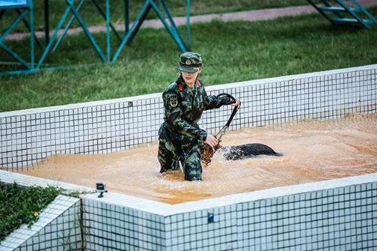 《奇兵神犬》张馨予跌倒被犬救 姜潮遇难训危机