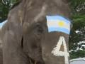 泰国举办大象踢球比赛 向球迷警示赌球风险