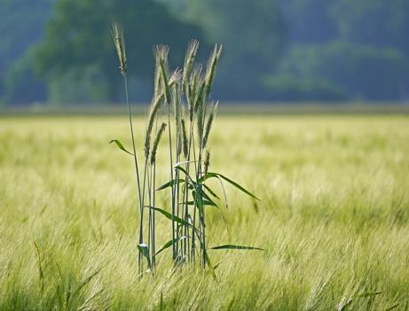 质量兴农――中城银信谈夯实农业生产能力基础