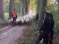 荷兰队户外训练遇不速之客 见了它们只能靠边站