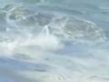 葡萄牙冲浪胜地纳扎雷掀起巨浪 冲浪高手显身手