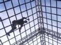 斯巴达勇士赛登陆厦门 全球4000多名勇士一决高下
