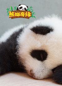 熊猫奇缘在线观看