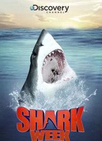 鲨鱼海洋电影_鲨鱼周-纪录片-高清视频在线观看-搜狐视频