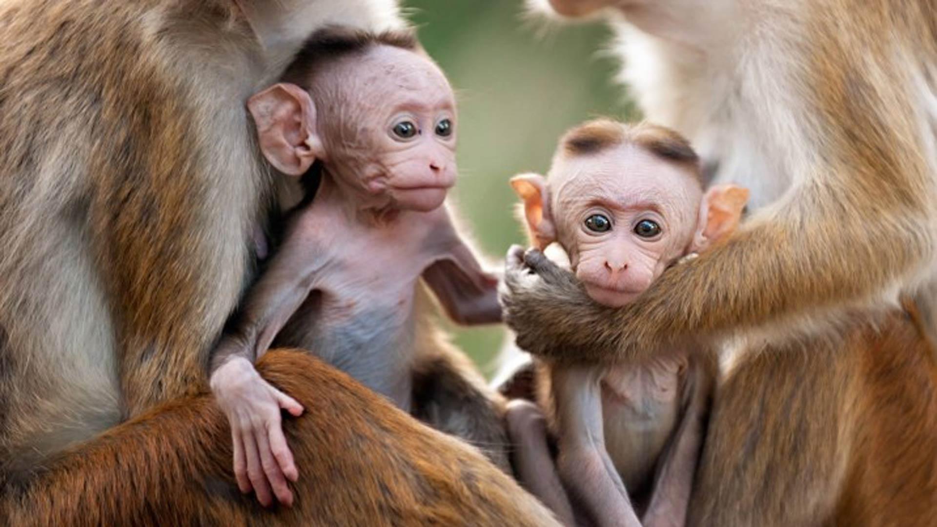 猴子_有关猴子的电影