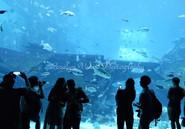 在S.E.A漫游海底世界