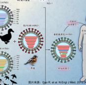 H7N9与人类的对话:我从哪里来?