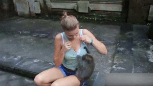 隔壁老王把猴哥都带坏了 对大胸情有独钟