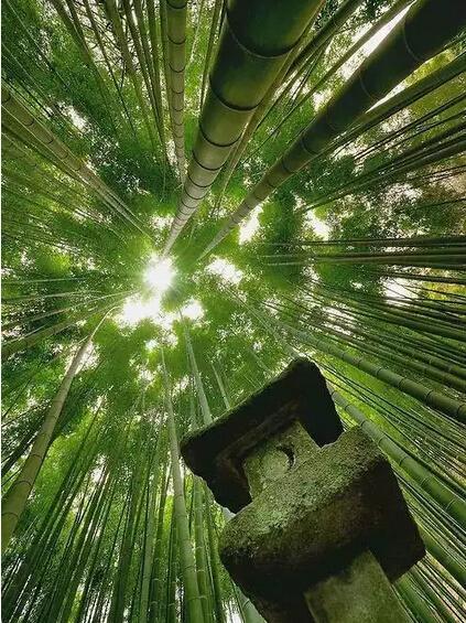 思越木结构|竹径通到哪里,由你做主!